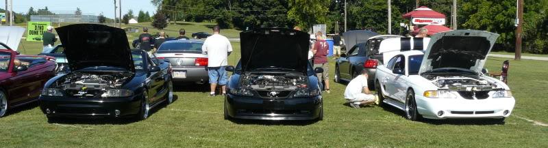 Line of Mustangs at a Show