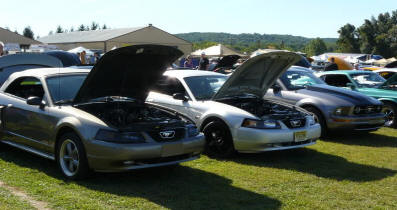 Rows of Mustangs at a Mustang Oriented Show