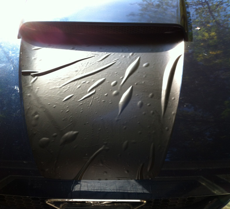 How to Install a Hood Decal on your 1999-2004 Mustang GT and V6 ...